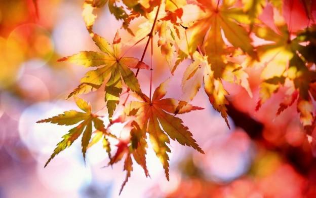 autumn-autumn-colours-autumn-leaves-355302-001