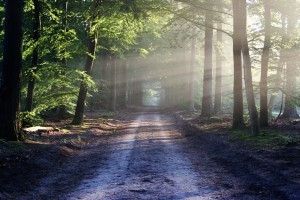 meditation vs self-hypnosis 2