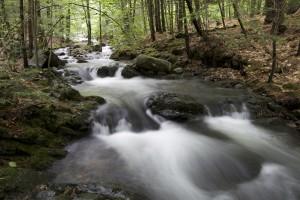 water-rocks-trees-leaves